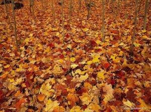 foto_autunno_365